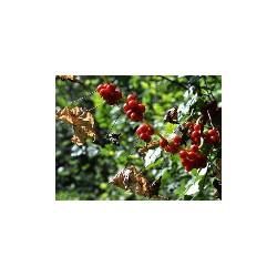 Berries, Tourrettes